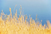 Relva seca — Fotografia Stock