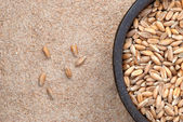 Dinkel wheat — Stock Photo