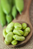 Broad beans — Stock Photo