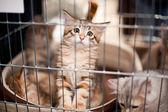 A captive kitten — Stock Photo