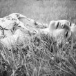 Black and white portrait of a beautiful young woman wearing a flower print summer dress lying on grass with her eyes closed. — Stock Photo #48031377