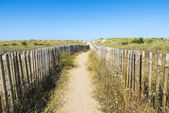 Beach Path — Stockfoto