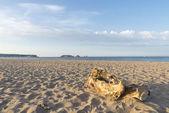 Empty beach in Costa Brava — Stock Photo
