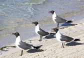 Seagulls Watching — Stock Photo