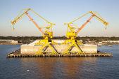 Two Yellow Cranes — Stock Photo