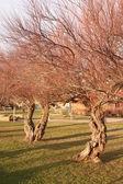 árvores de folha caduca — Foto Stock