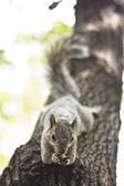 Squirrel over tree — Stock Photo