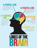 Lobes of The Brain. Infographic Vector Design — Stock Vector