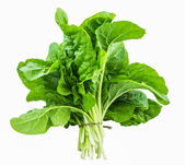 Swiss Chard — Stock Photo