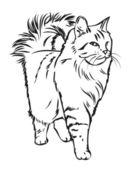 Siberian cat — Stock Vector