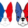 Bulldog with french flag colors — Stock Vector