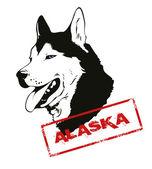 Chien husky alaskan — Vecteur