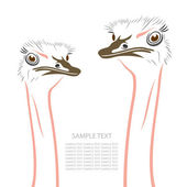 Ostrich heads — Stock Vector