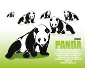 Giant panda — Stockvektor