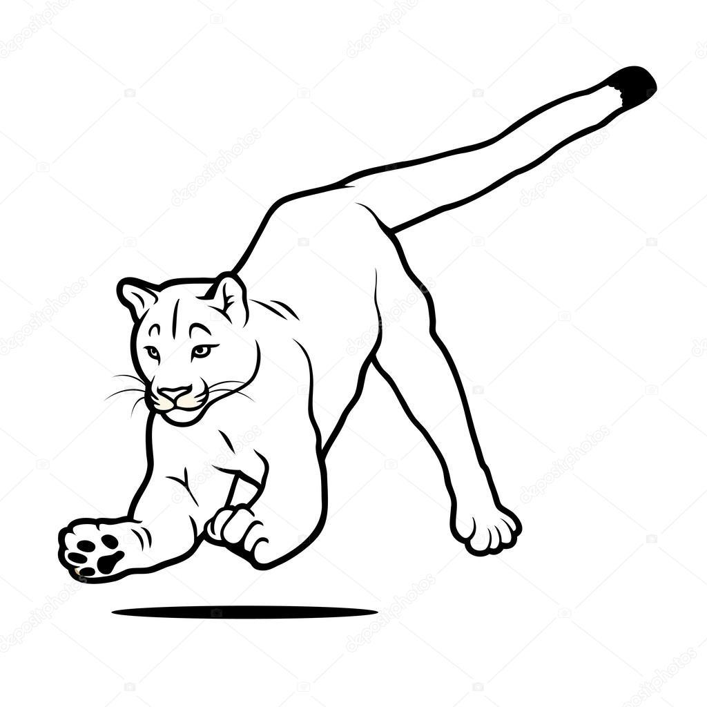 cougar  u2014 archivo im u00e1genes vectoriales  46549245