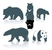 Bear species — Stock Vector