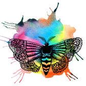 Krajkový motýl a akvarel spot. — Stock fotografie