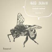 Bee. Hand drawn vector illustration. — Stock Vector