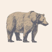Bear. Hand drawn vector illustration. — Stock Vector