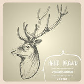 Deer portrait. — Stock Vector