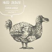 Dodo or Raphus cucullatus. — Stock Vector