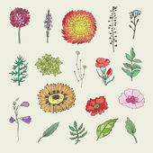 Ensemble floral. — Vecteur