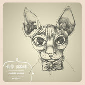 Sfinks cat portrait. — Stock Vector