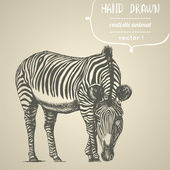 Zebra. Hand drawn vector illustration. — Stock Vector