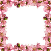 Frame with peach flowers — Stockfoto