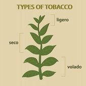 Types of tobacco — Stock Vector