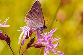 Farfalla seduta su un fiore — Foto Stock