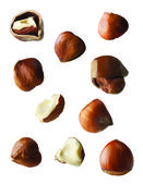 Hazelnuts entire and pieces on white background — Stock Photo