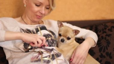 Chihuahua dog and pregnant woman — Stok video