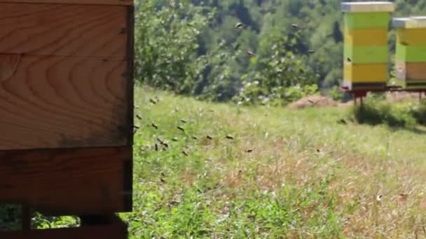 Abejas cerca de una colmena — Vídeo de stock