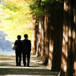People walking in the park Nami Island — Stock Photo #47016139
