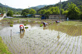 People working on rice paddy — Stock Photo