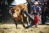 Cheong-do  Bullfighting Festival — Stock Photo