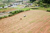 Farmer in the rural landscape — Stock Photo