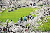 Beautiful spring landscape in South Korea, daereungwon,  Gyeongju, banwolseong — Stockfoto