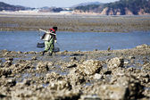 Fisher looks to catch the  tidal oyster — Stock Photo