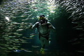 Diver in the aquarium with fishes — Stock Photo