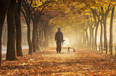 Woman walking with her dogs at Incheon Grand Park — Stock Photo