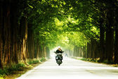 Man on the scooter rides through the Damyang  forest trails — ストック写真