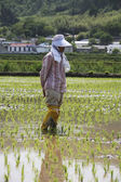 Farmer  in the rural landscape Korea — Stock Photo