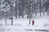 Человек удаляет снег с деревьев в Кёнбоккун — Стоковое фото