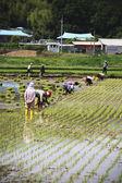 Farmer  in the rural landscape Korea — Stok fotoğraf