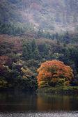 Lac jusanji — Photo