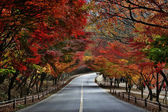 Forest road — Foto Stock