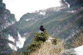 маленькая птичка на куст в горах — Стоковое фото