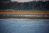 Migratory birds on the lake Sihwaho — Stock Photo